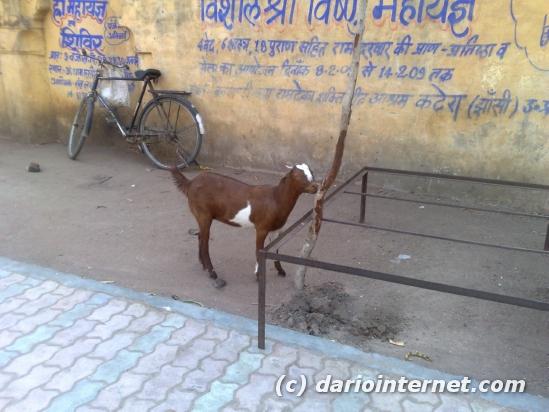 tr_india_orchha22032009221