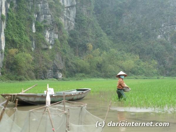tr_vietnam_tam_coc_0614