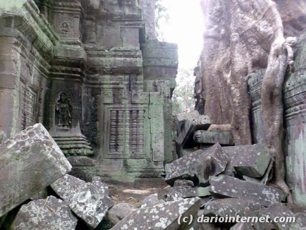 tr_angkor_en003_roots_trees